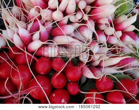 A layer of freshly picked white radishes contrasted with a layer of red radishes.