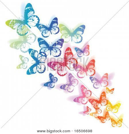 coloridas mariposas