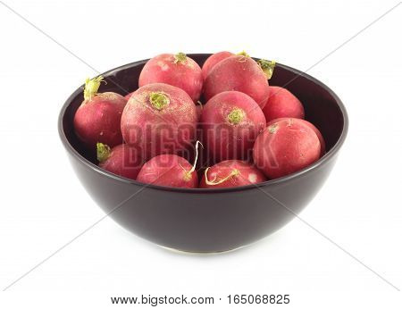 Many red radishes in purple bowl closeup isolated on white