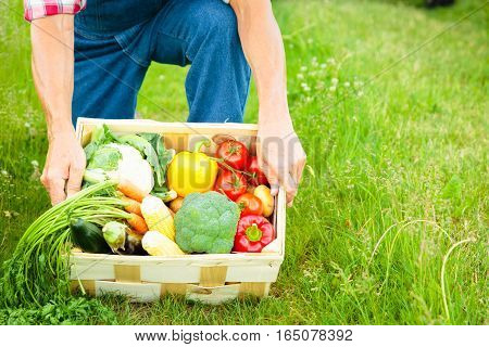 farmer standing in a field, holding a crate of vegetables