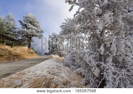 Moissiere Pass and Sapet forest in winter with frost covered trees. Hautes Alpes Ecrins National Park Alps France