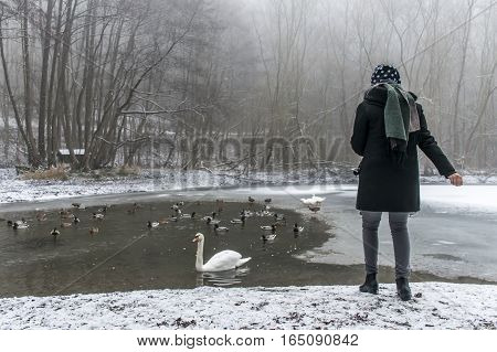 A young woman feeding on a lake swans and ducks Bird feeding in winter 4
