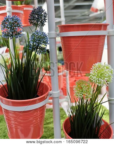 Blue and White Artificial Allium Giganteum Blossoms or Giant Onion Flower in Orange Metal Pots for Home and Office Decoration without The Care.