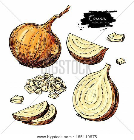 Onion hand drawn vector set. Full, half and  cutout slice. Isolated Vegetable artistic style object. Detailed vegetarian food drawing. Farm market product. Great for menu, label, icon