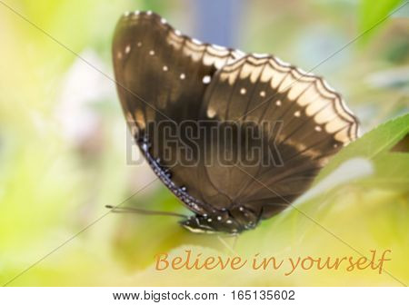 Believe in yourself - motivational quote sweet dreamy and de-focused of beautiful butterfly absorb some sweet from flowers in sunny day
