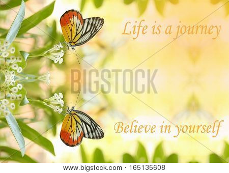 Life is a journey Believe in yourself - motivational quote sweet dreamy of twin beautiful butterfly absorb some sweet from flowers in sunny day