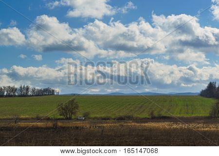 The field of green shoots of winter crops. Spring landscape.