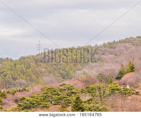Beautiful blue sky with white puffy clouds over a wooded area near the top of a mountain