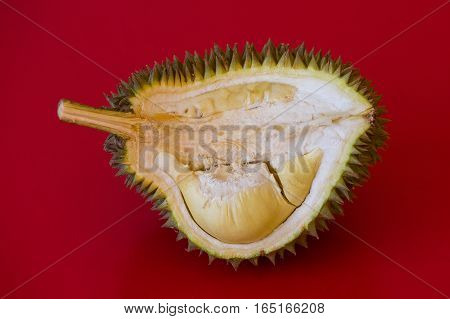 King of fruits in asia durian on red background. Close up