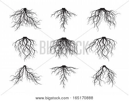 Set of black Roots. Vector Illustration and graphic element.