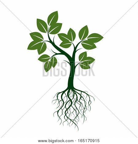 Green Trees with Roots. Vector Illustration and graphic element.