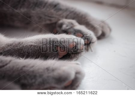 four paws of a cat of peacefully sleeping cat. close