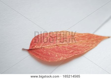 packing: a petal on a white background. background
