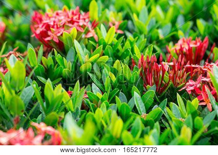 Fresh flower in nature green leaf, red spike