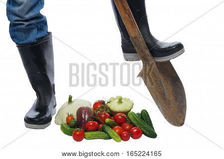 farmer feet on the bottom of the shovel and scattered vegetables