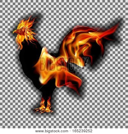 Traditional fire rooster with flame on the head, legs and tail symbol of New Year 2017. Isolated object that can be used with any image, text or background.