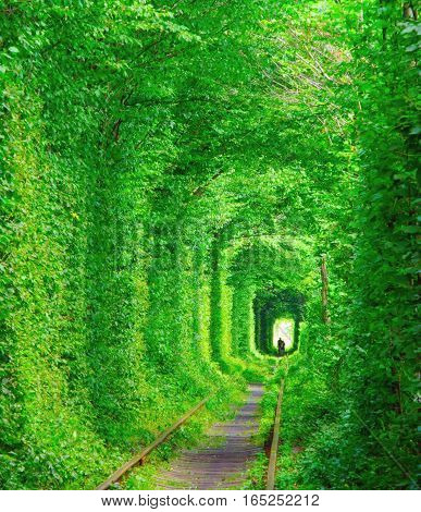 Romantic tunnel of lovers in the green leafs forest at summer Ukraine.