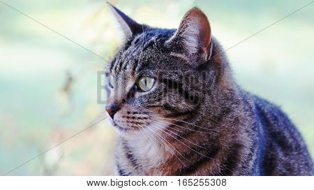 Tabby cat outside on a green background.