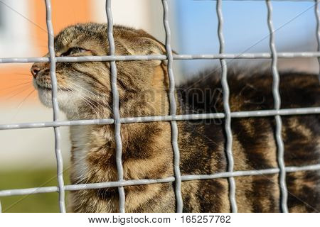 Colorful domestic cat behind barricade outdoors - portrait