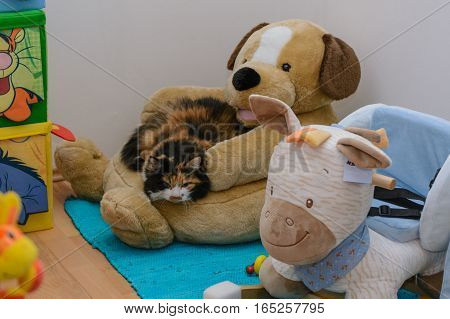 Colorful domestic cat enjoys relaxing on a plush dog