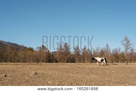 Lonely wild horse in the steppe to visit.