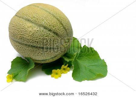 Whole Cantaloupe with leaves and flowers from Cantaloupe vine, isolated on white