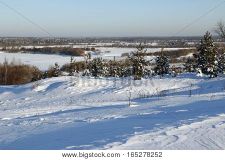 Snowy Field And Trees In A Winter Day