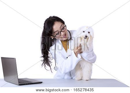 Portrait of veterinarian examining a maltese dog by using stethoscope isolated on white background