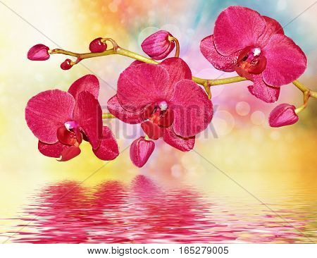 Colorful bright pink orchid flowers on a background of the summer landscape.