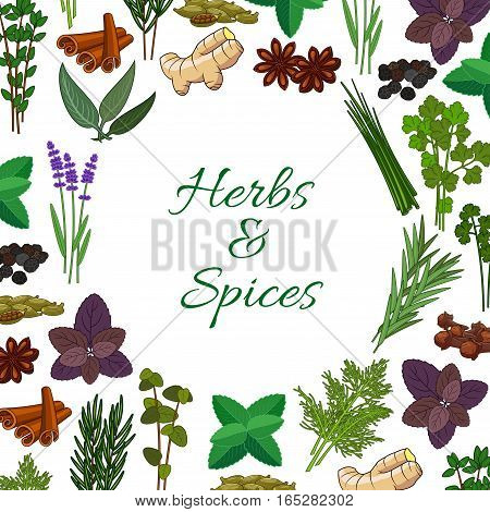 Seasonings spicy herbs or herbal spices condiments. Rosemary and thyme, sage bay leaf, anise and oregano, basil, dill and parsley, ginger, cumin and chili pepper, aromatic vanilla with mint, cinnamon and tarragon. Vector round poster