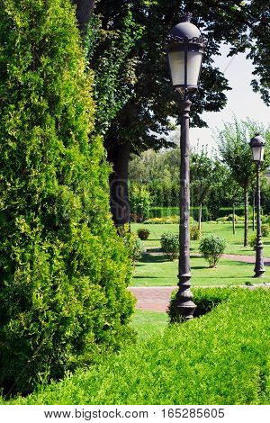 high green arborvitae next to the lamppost in the town park