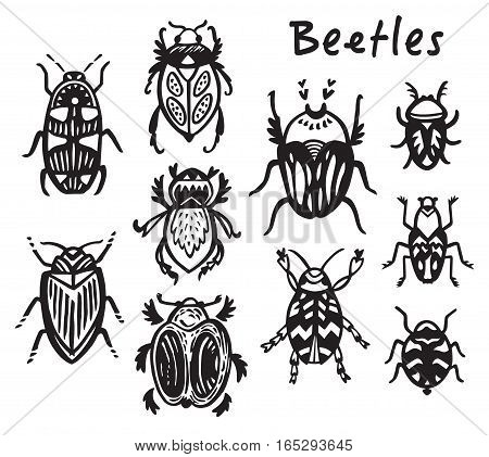 Vector set of beetles. Cartoon style. Ink bugs isolated on white background