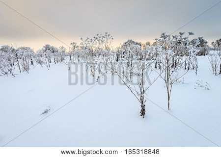 Branches Covered With Frost At Winter Season