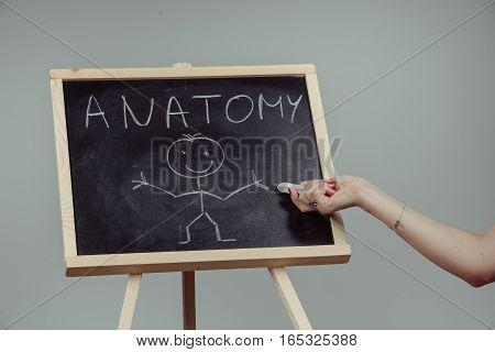 Anatomy Word Written On Chalkboard