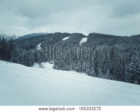 Winter landscape with snow drifts in a mountain forest after a snow storm in Carpathians Ukraine.