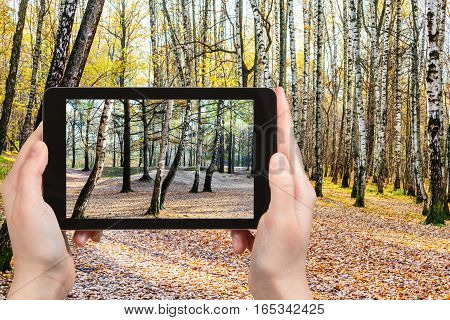 Photo Of Birch Trees In Forest In Autumn