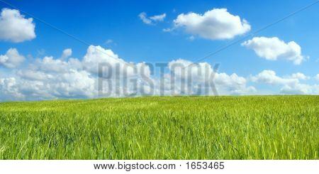 Campo de cebada sobre el hermoso cielo azul