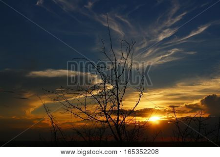 The twilight of sunset sky with shadow of dry branches