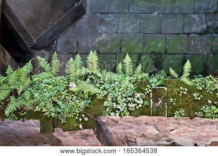 Detail of some small fern plants and green moss on a wall
