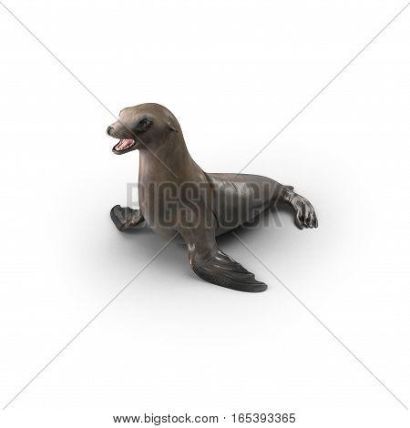 Sea Lion on white background. 3D illustration