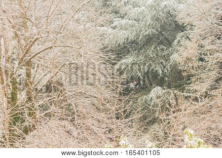 view of snow covered trees / close-up  of a white winter landscape