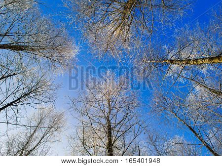 wood in winter, white, up, scenic, frost, season, wood, sky