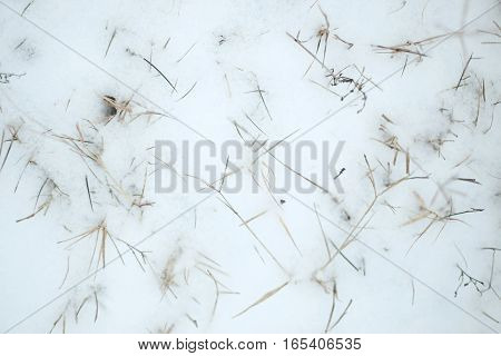 Dry Grass Covered With Snow