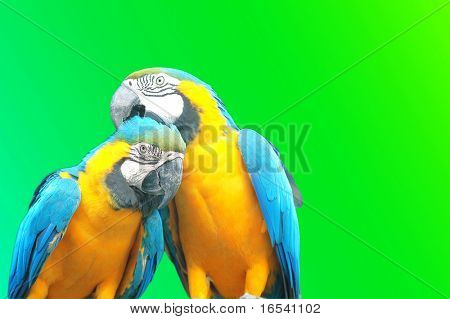 The parrot sitting on the branch
