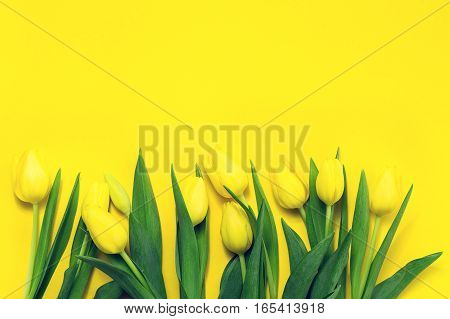 Fresh beautiful yellow tulips on yellow colorful background. Spring concept. Horizontal top view with copy space.