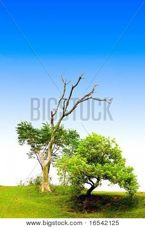 The tree with the blue sky background