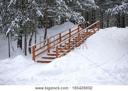 Footpath in dense snowy winter coniferous forest