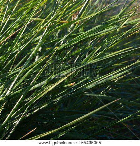 Grass blades lean away from the autumn sunlight.