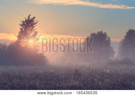 Beautiful spring morning. Spring misty morning in meadow. Spider web on grass in sunlight. Bright sunrise over field.