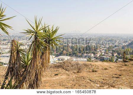 Beautiful shot of joshua tree plants overlooking cityscape view of los angeles california